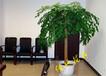 苏州绿植租赁公司苏州绿植花卉养护公司
