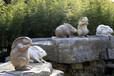 精美的石雕工艺品动物石雕兔子雕塑报价行情