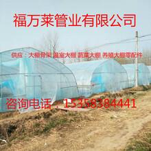 常年供应蔬菜大棚温室大棚养殖大棚图片
