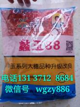 蠡玉88大丰30玉米种子品种大全厂家批发高产最火图片