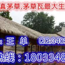 上海仿真茅草瓦pvc茅草瓦,铝合金茅草瓦,度假木屋