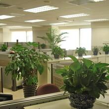 绿植设计,绿植租赁,绿植服务