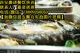 重庆万州烤鱼技术培训夜色烧烤纸包鱼香辣烤鱼技术学习