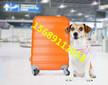 青岛宠物托运公司专业托运图片