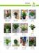 广州科学城哪家植物租摆花木植物出租的绿化公司服务好