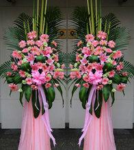 广州科学城绿植租赁花木租赁植物出售花卉出售绿化公司