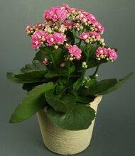 在广州科汇金谷可以提供专业植物租摆养护绿植花木出租的绿化公司