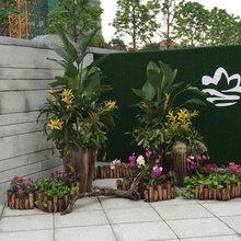 广州阳晨绿化-天河客运站长湴-植物租摆-绿植出租-室内植物养护-花木租赁