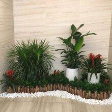 室内植物盆栽租赁天河区专业服务品质保证广州阳晨绿化