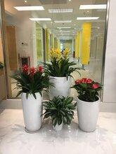 广州海珠区客村大塘UP智谷附近提供植物租摆花木租赁绿化公司