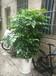 专业提供广州萝岗科学城室内花草盆景租赁植物出租服务