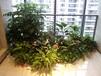 找提供广州写字楼植物租摆花卉绿植出租的绿化公司