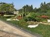 广州能提供园区植物养护绿植保养的绿化公司