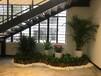 广州科学城绿地中央广场附近提供办公室植物租摆租赁