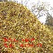 被動防護網主動防護網柔性防護網攔石網環形網環形被動防護網