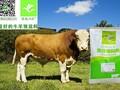 肉牛预混料5%肉牛猛催肥预混料图片