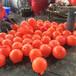 洛阳水库危险警示浮球专业生产厂家