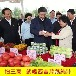 芹菜汁厂家宁夏西吉芹菜纯汁无任何添加剂新鲜蔬菜汁灌装250ML