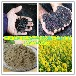 油菜籽苗粉宁夏野生油菜籽叶粉菜籽苗(叶)汁粉油菜籽超浓缩