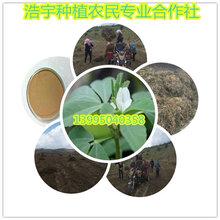 葫芦巴提取物葫芦巴碱50%葫芦巴速溶粉厂家批发供应葫芦巴多糖图片