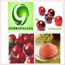 蔓越莓果汁粉蔓越莓活性酵素粉固原浩宇批发价格蔓越莓提取物蔓越莓速溶粉