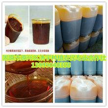沙棘果油高速离心分离纯沙棘果油批发价格现货供应固原浩宇图片