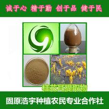 桂花菌提取物20:1桂花菌原粉薄皮毛背菌粉现货