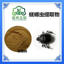 宁夏供应大将军提取物20:1大将军蛋白肽粉黑兜虫冻干粉香草生物
