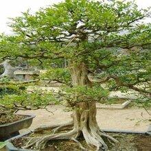 雕塑仿真树价格雕塑仿真树批发价格雕塑仿真树图