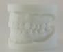 白刚玉牙模型