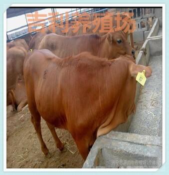 临沂那里有卖小牛的