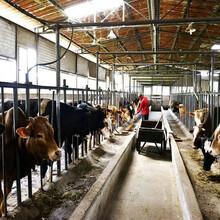 東北肉牛市場圖片