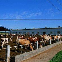 快速育肥牛技术