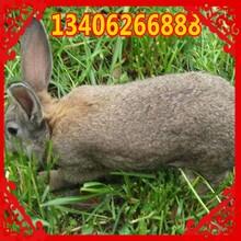 山西省临汾市安泽县哪里养殖兔子图片