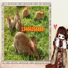 辽宁省葫芦岛市连山区哪里养殖兔子图片