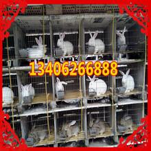 河南省平顶山市汝州市哪里养殖兔子图片