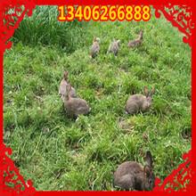 伊春市嘉荫县哪里养殖兔子图片