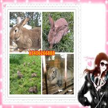 江西省九江市星子县哪里养殖兔子图片