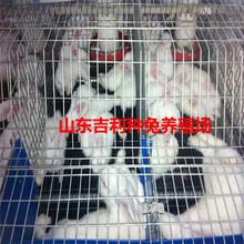 洛阳市嵩县哪里养殖兔子图片