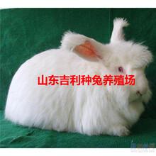 江西省赣州市定南县哪里养殖兔子图片