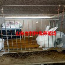 河北省保定市容城县哪里养殖兔子图片