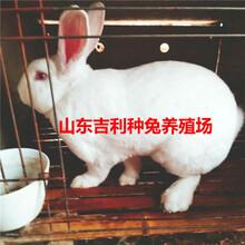 吕梁市中阳县哪里养殖兔子图片