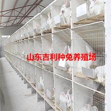 苏州市吴中区哪里养殖兔子图片