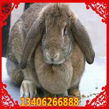 安徽省合肥市巢湖市哪里养殖兔子图片