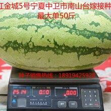 西瓜种子就选双红金城5号图片