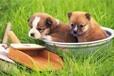 莆田宠物洗澡服务中心,莆田专业宠物洗澡服务行业,兰猫供