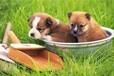 莆田宠物洗澡服务行业,莆田专业宠物洗澡服务,兰猫供