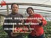 上海水果微商代理合作-上海草莓拿貨貨源-煙臺蘋果產地直供