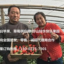 上海水果微商代理合作-上海草莓拿货货源-烟台苹果产地直供