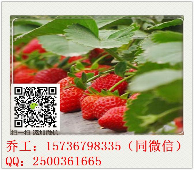 宁南县写/做可行性报告公司-写分析报告多少钱